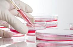 Органотерапия – новый доступный и эффективный метод омоложения