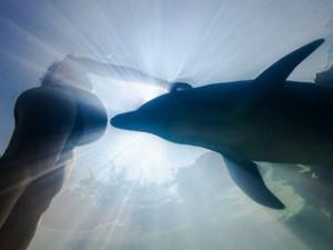 Дельфины вместо УЗИ: правда или вымысел?