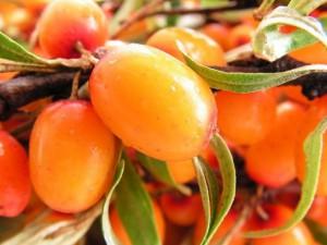 Оранжевое чудо косметологии