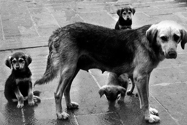 О любви к себе и терпимости к бродячим животным