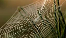 Морщины «зашьют» слюной паука
