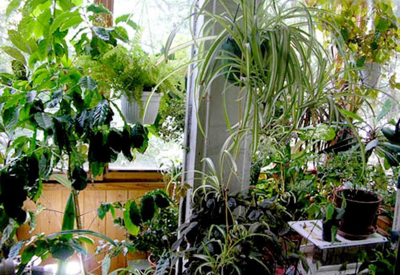 Растения, как очистители от вредных токсинов