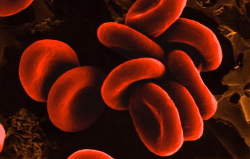 Как группа крови влияет на характер человека