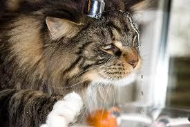 Как ухаживать за вашим котиком