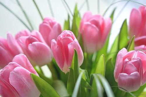 Компания по продаже цветов Duty Free Flowers