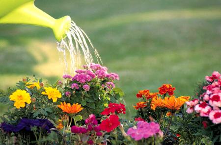 Активное цветение при минимальном поливе