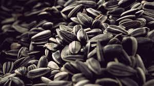 Какая польза от подсолнечных семечек