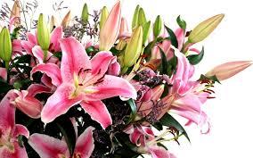 Цветы и букеты от базы «Мосцветторг»