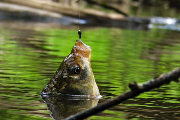 Советы для летней рыбалки
