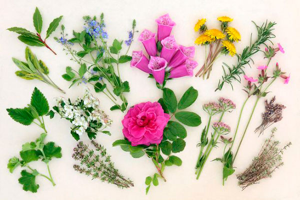 Лечебные растения при уходе за собой