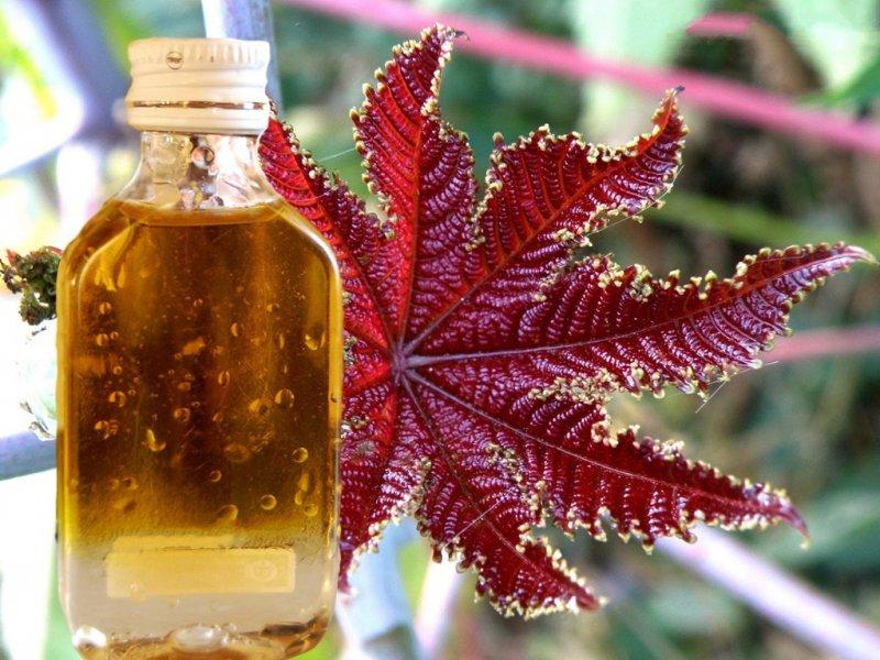 Секреты касторового масла, которые сотворят чудо с вашей кожей