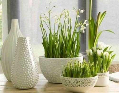 Эксперты раскрыли омолаживающие свойства комнатных растений