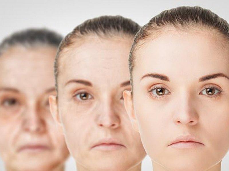Противовозрастные молекулы защитят печень и почки