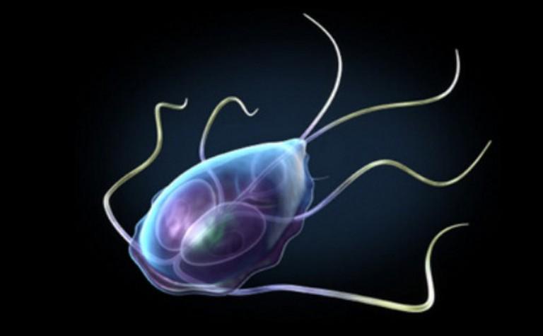 Женские болезни: трихомониаз