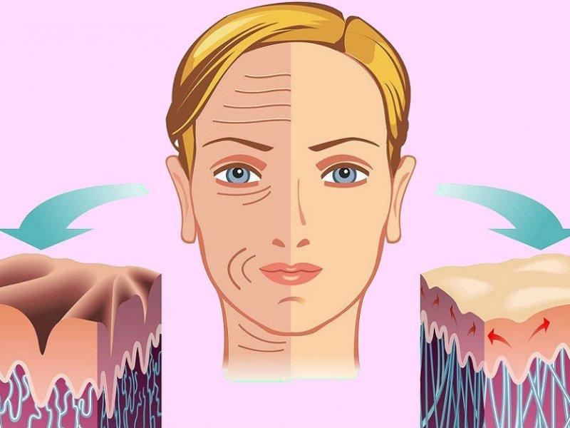 Продукты, содержащие колаген, необходимый для молодости кожи