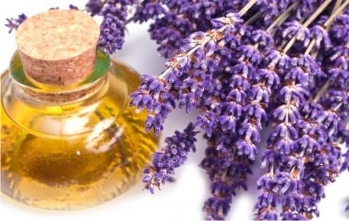 Лавандовое масло — полезные свойства и использование в косметологии
