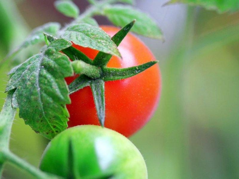 Обычные помидоры помогут сберечь молодость и стать неотразимой