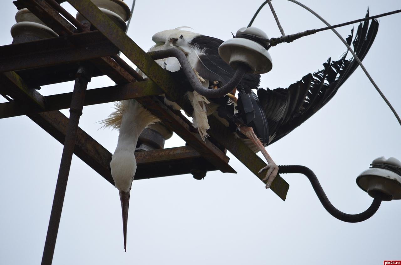 Почему птицы не погибают, когда сидят на линиях электропередач